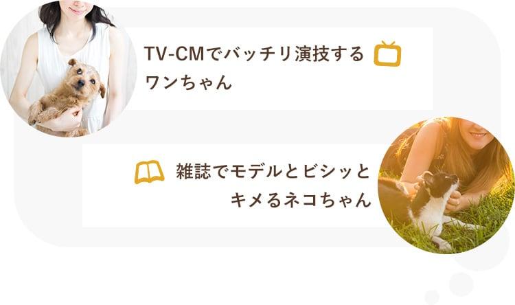 TV-CMでバッチリ演技するワンちゃん 雑誌でモデルとビシッとキメるネコちゃん
