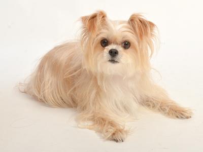 動物プロダクション エムドッグス ペットモデル ミックス犬 モモ