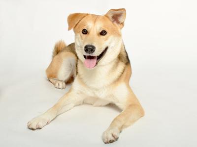 動物プロダクション エムドッグス ペットモデル ミックス犬 JOY