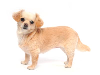 エムドッグス,動物プロダクション,ペットモデル,ペットタレント,モデル犬,タレント犬,MIX犬,ミミ