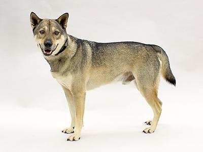 エムドッグス,動物プロダクション,ペットモデル,ペットタレント,モデル犬,タレント犬,ミックス犬,ハッピー