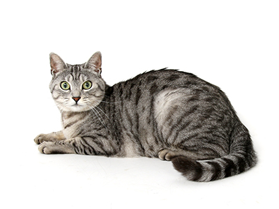 エムドッグス,動物プロダクション,ペットモデル,ペットタレント,モデル猫,タレント猫,MIX猫,ジョニ