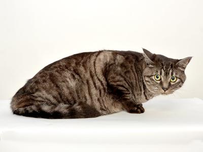 エムドッグス,動物プロダクション,ペットモデル,ペットタレント,モデル犬,タレント犬,日本猫,とらきち,