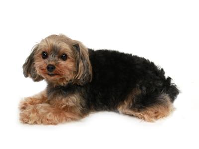 エムドッグス,動物プロダクション,ペットモデル,ペットタレント,モデル犬,タレント犬, MIX,つくね