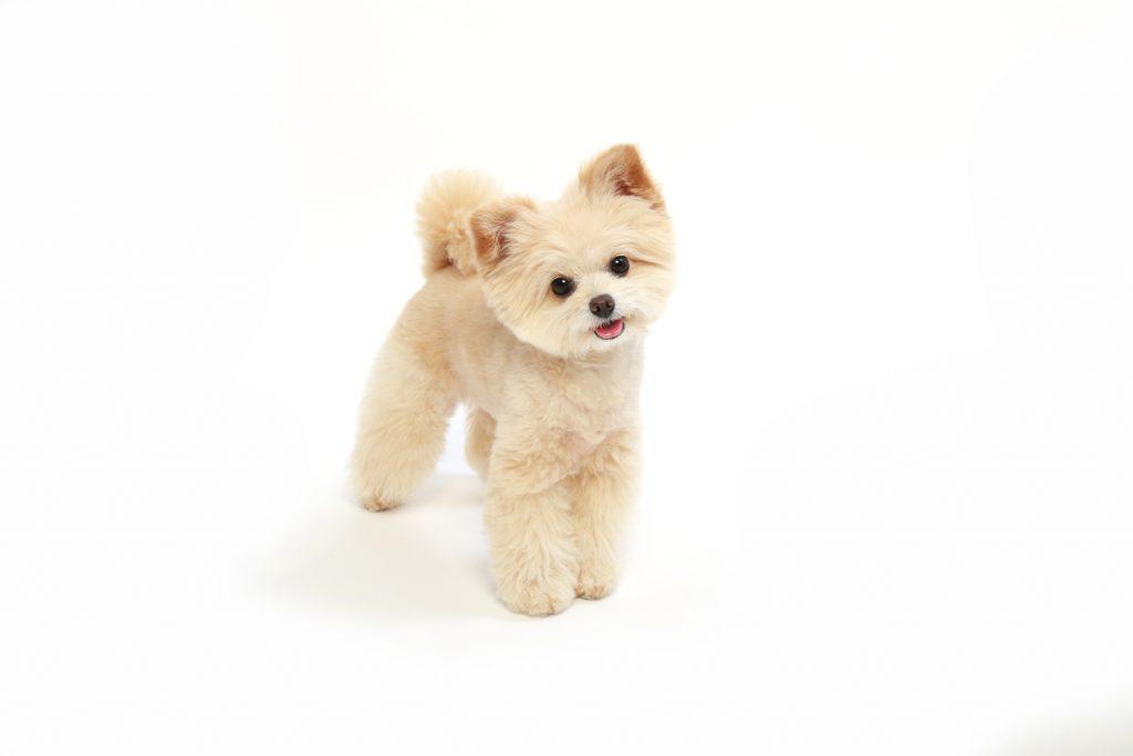 動物プロダクション,エムドッグス,ペットモデル,タレント犬,MIX,アンディーブ,