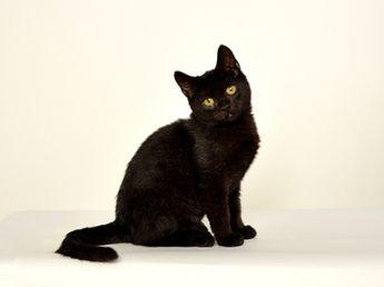 エムドッグス,動物プロダクション,ペットモデル,モデル猫,黒猫,くろまめ