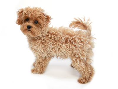 エムドッグス,動物プロダクション,ペットモデル,ペットタレント,モデル犬,タレント犬,MIX,クルミ