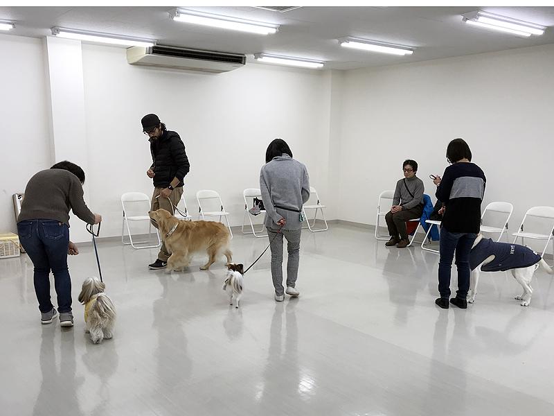 1月19日タレント犬育成講座中級講座を開催しました。【ペットモデルの ...